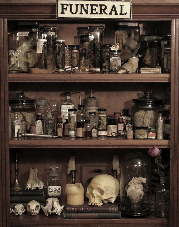 Collection of preserved animals and or human including skulls ?