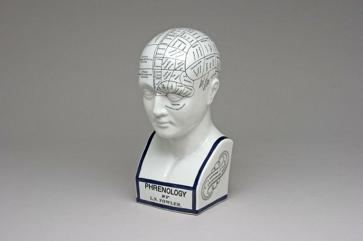 L.N. Fowler Phrenology Head  Vintage L.N. Fowler porcelain Phrenology head, 12 inches high. $45