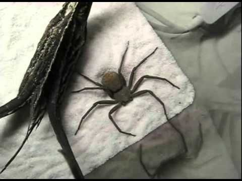 I hate spiders but this was pretty cute. :)