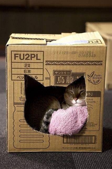 Gatos graciosos en una caja de cartón