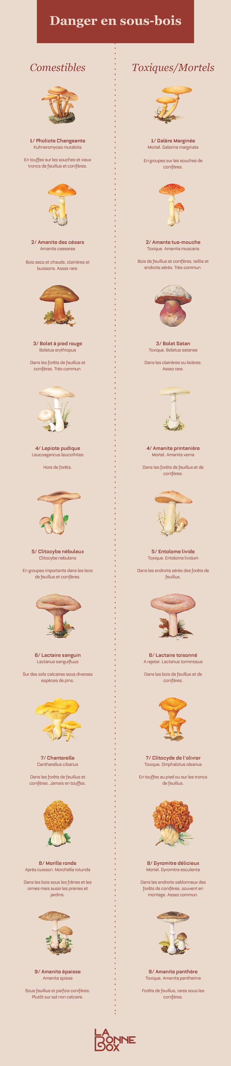 Infographie Les champignons vénéneux