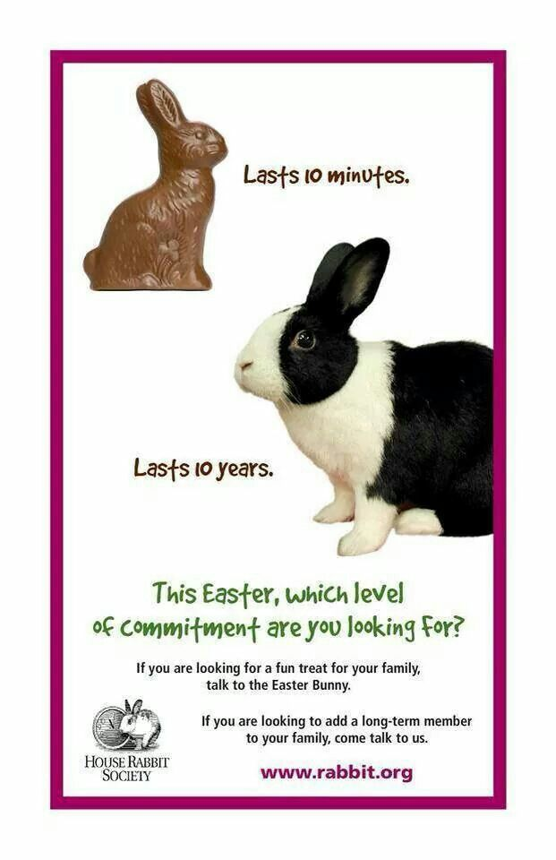 144 best not easterxmas gifts images on pinterest bunnies give chocolate bunnies not real ones real rabbits are a 10 year commitment and deserve the same respect and care as cats or dogs negle Images