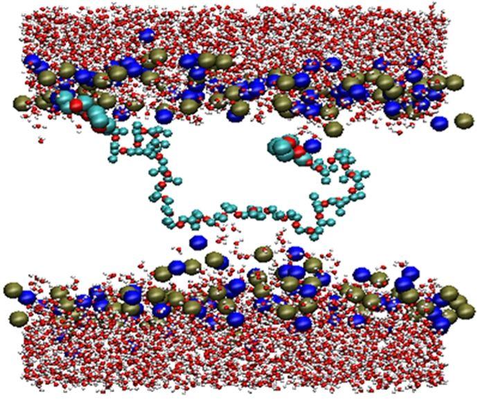 Molecular Dynamics Simulations of Amphiphilic Macromolecules at Interfaces by Selina Nawaz, University of Manchester.