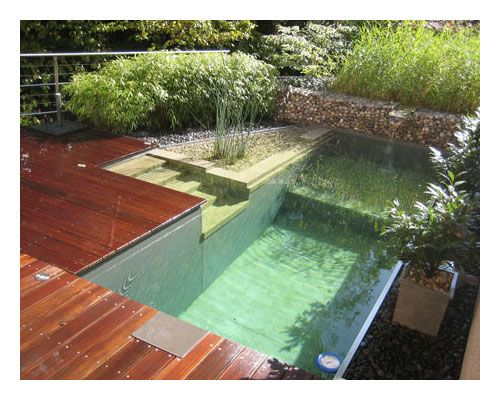 Pool for a small garden.  ..... Google Image Result for http://www.neublack.com/wp-content/uploads/2009/08/chemical-free-swimming-pools-3.jpg
