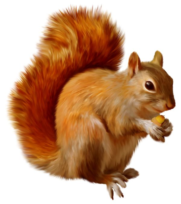 squirrel clip art - Go...