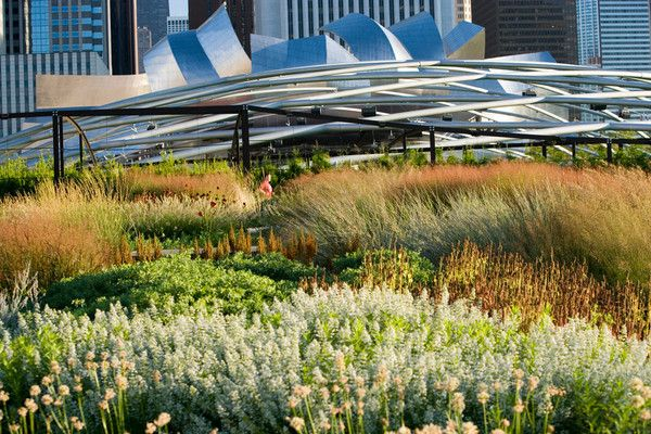 Lurie Garden, Milennium Park, Chicago : one of my favorite places.