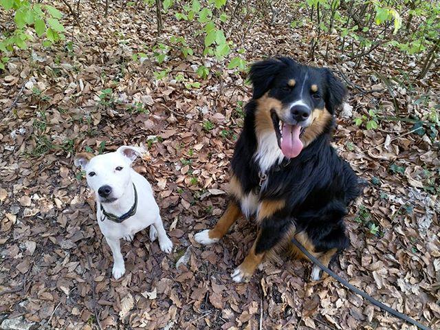 Endlich warm denkt die Kleine die nun kein Mäntelchen mehr tragen muss. So ne Affenhitze denkt der Grosse der schon bei 18 Grad Innentemperatur kühle Steinböden sucht.  Tja zum Glück können die Zwei das Wetter nicht selber bestimmen!  #dog #dogsofinstagram #dogfun #lovemydog #happydog #Naturmomente