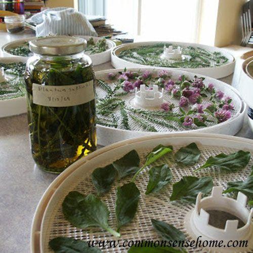 homegrown-medicinals.jpg 500×500 ピクセル