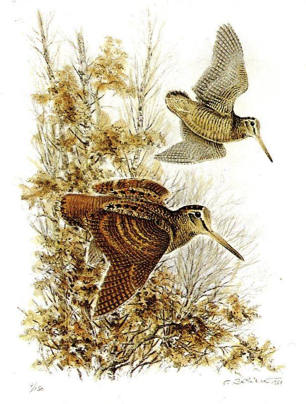 """TABLEAU PEINTURE bécasse oiseau chasse animaux - """"Vol de bécasses"""""""