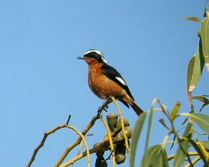 List of birds of Algeria - WOW.com