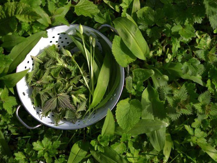 2 reţete foarte sănătoase cu LEURDĂ, PĂPĂDIE şi URZICI de savurat în această primăvară - Top Remedii Naturiste