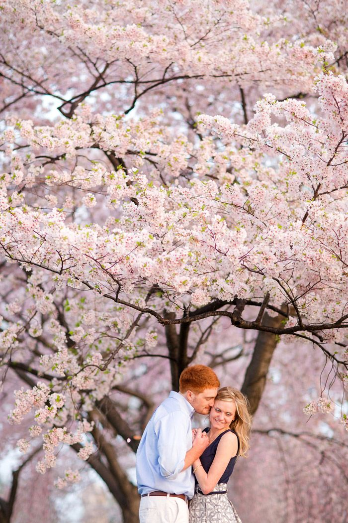 spring flowery cherry blossom engagement