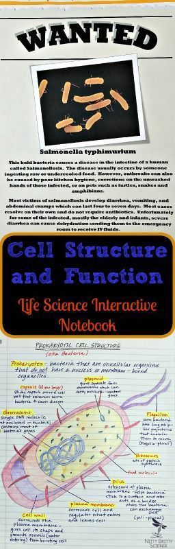 Cell Structure and Function: Life Science Interactive Notebook includes the following main concepts of cells: •	The Discovery of Cells  •	The Plasma Membrane  •	Eukaryotic Cell Structure  •	Prokaryotic Cell Structure  •	Cellular Transport http://Nittygrittyscience.com