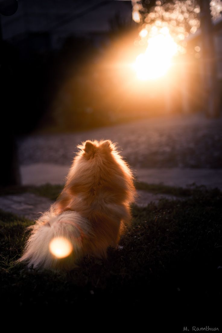 Pom looking at the sunset. Photograph by Maikel Ramthun