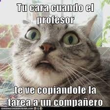 Resultado de imagen para imagenes de gatos graciosos #videosgraciosos