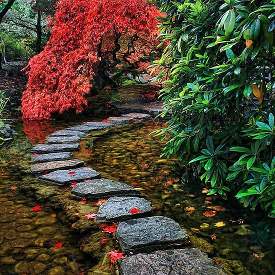 Japanese Garden: 17 Best Images About Japanese Gardens On Pinterest
