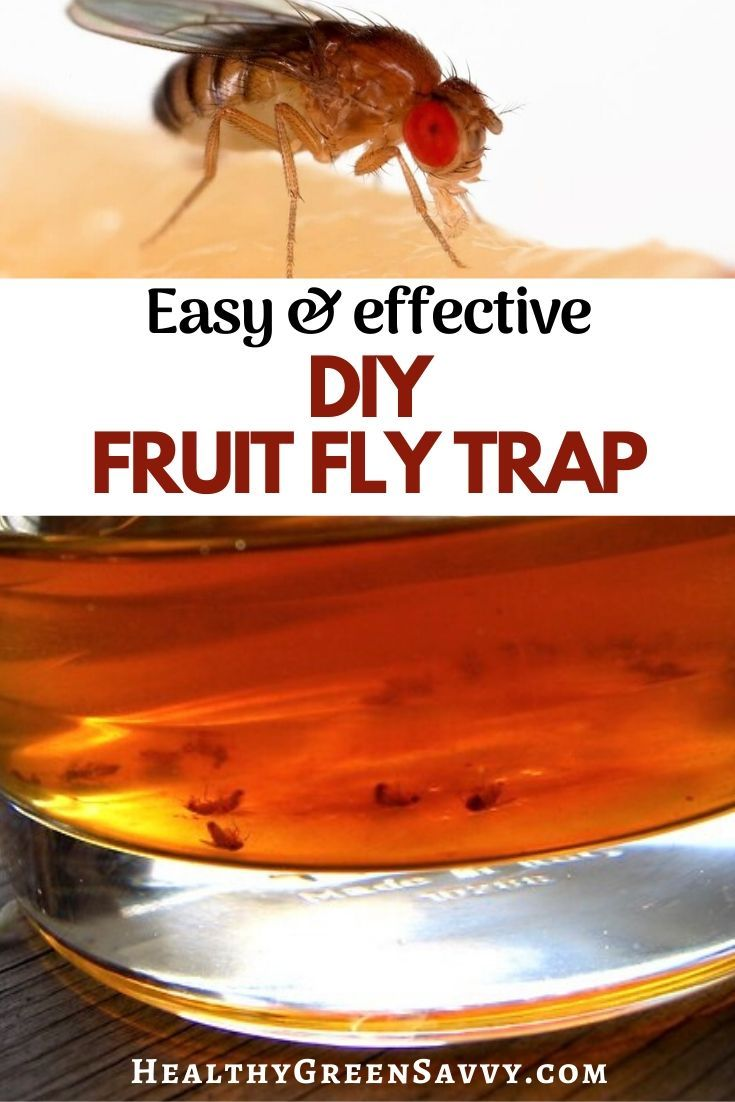 Homemade Fruit Fly Trap With Apple Cider Vinegar To Get Rid Of Fruit Flies In 2020 Homemade Fruit Fly Trap Fruit Fly Trap Fruit Flies
