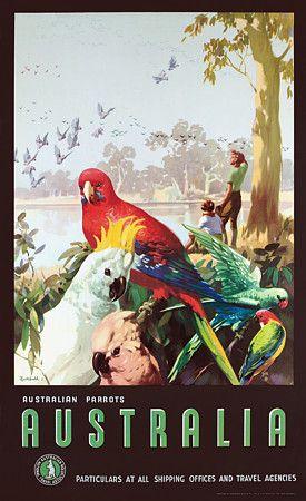 Australian Parrots by James Northfield c.1930s  http://www.vintagevenus.com.au/products/vintage_poster_print-tv603