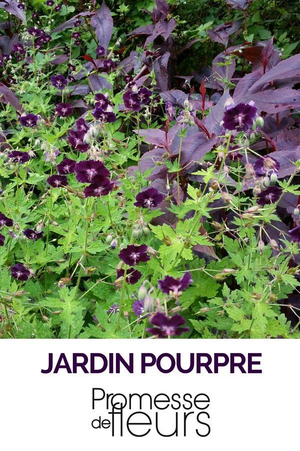 Géranium Phaeum & Persicaria Red dragon http://www.promessedefleurs.com/vivaces/vivaces-par-variete/geraniums-vivaces/geranium-phaeum-p-4655.html - http://www.promessedefleurs.com/vivaces/vivaces-par-variete/renouees/renouee-persicaria-micro-red-dragon-p-805.html