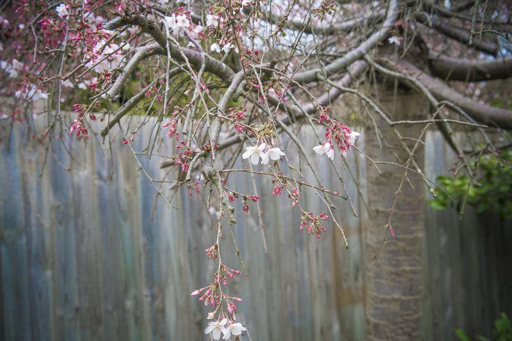 spring just beggining ...
