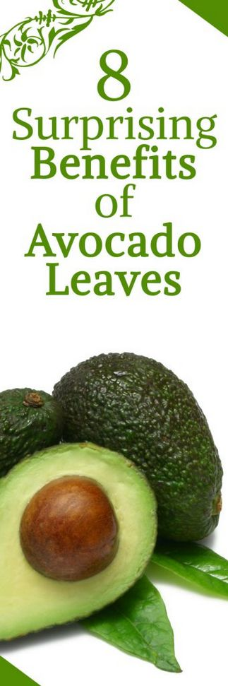 8 Surprising Benefits of Avocado Leaves When you go out to buy fruits you tend to see only the avocado fruit and not the leave and this has made many people not to know the healthy benefits of what the leaves of avocado can do. But studies have shown that we can use the leaves of avocado in many ways and
