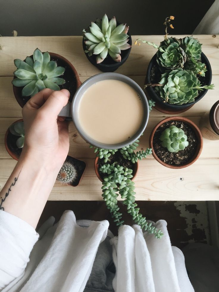 Sweet #succulents and a creamy #coffee. #Perfect!