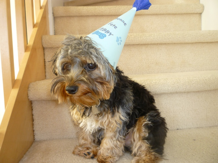 my baby with his birthday  hat!! so lovelyyyy <3