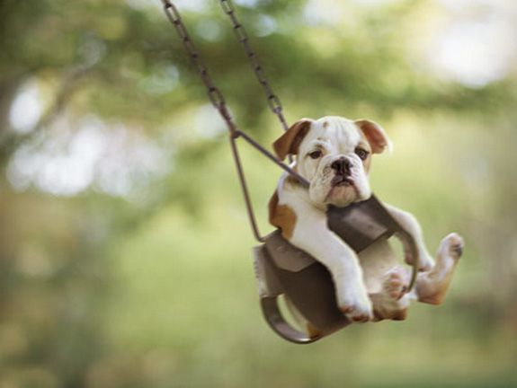 :): Animals, So Cute, Bulldogs, Swings, Pets, Puppy, Smile