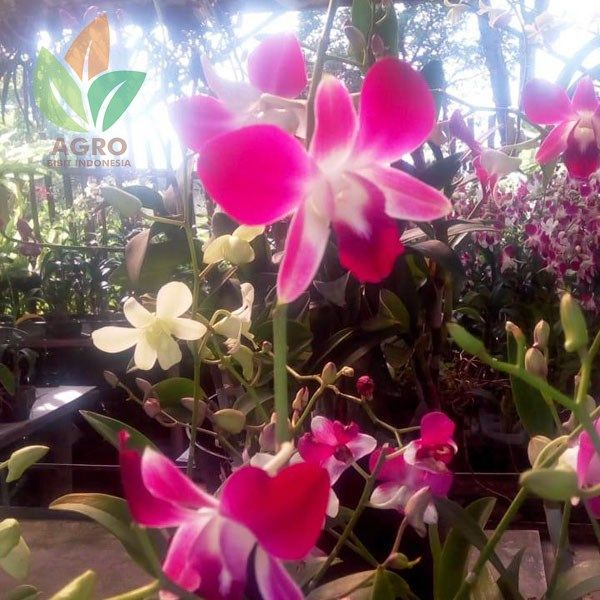 Lokasi Kebun Anggrek Bandung
