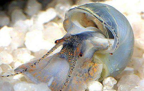 брюхоногие моллюски картинки - Поиск в Google | Улитка ...