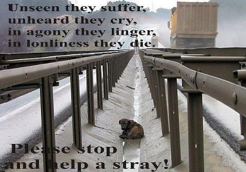 Please stop and help a stray dog or cat.  Please don't ignore their suffering and just walk on by them!Awesome Dogs, Crazy Dogs, Animal Welfare, Stray Dogs, Dogs Rescue, Animal Awareness, Animal Issues, Pets Adoption, Dogs Lady