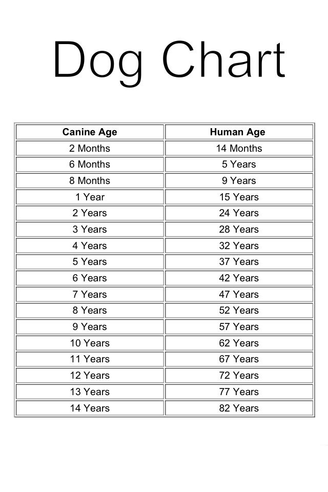 Age Chart for Dogs