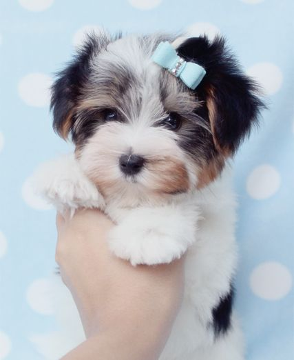 Ccuteanimalsblogspotcom A Girls Best Friend Pinterest
