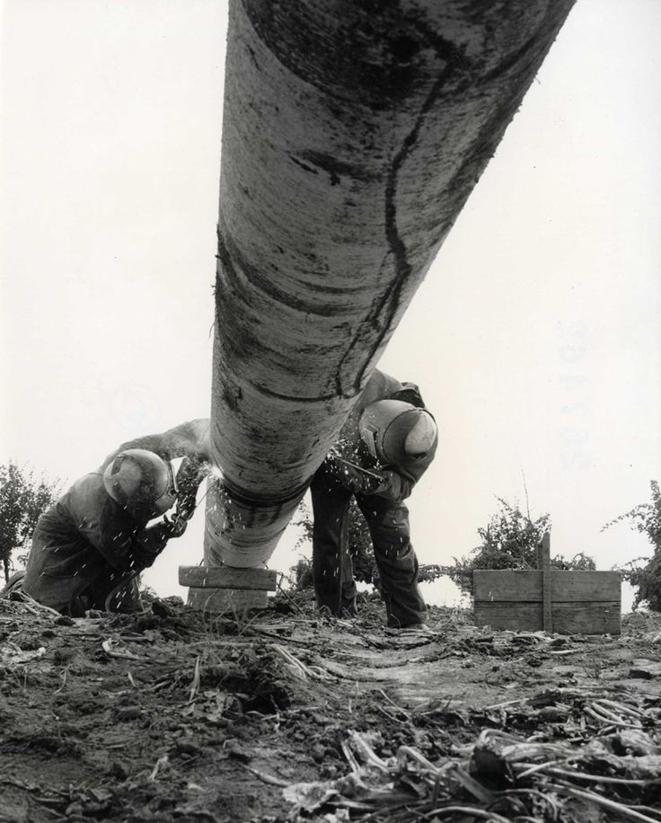 Vintage Pipeline Photography Photo and History Archive