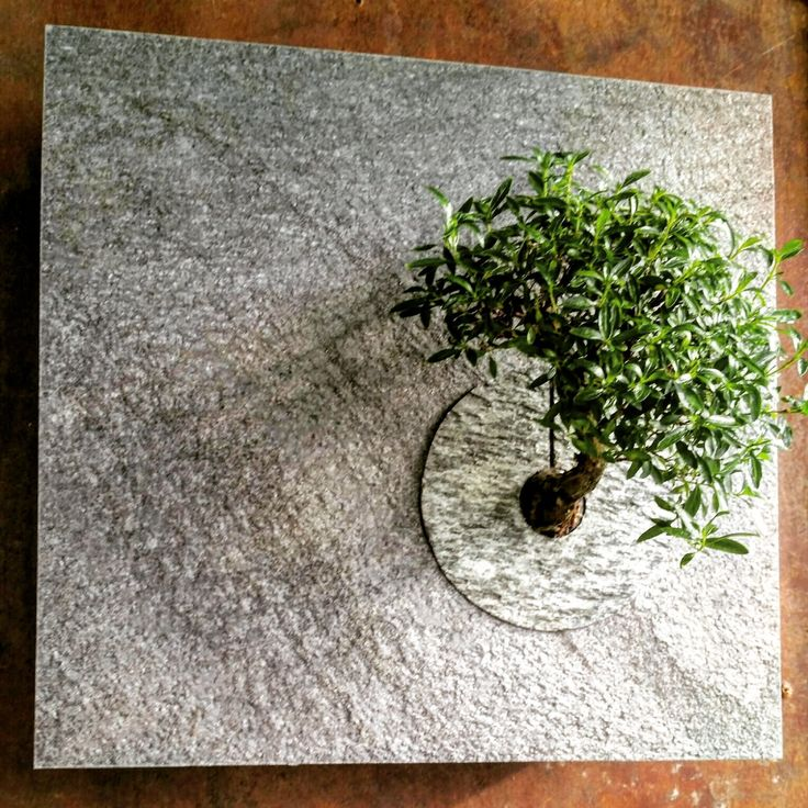 Questo vegetale verticale di Verdecontemporaneo00 su Etsy