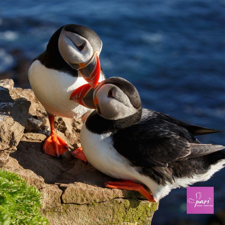 438 best Wassertiere images on Pinterest | Ocean creatures, Sea ...