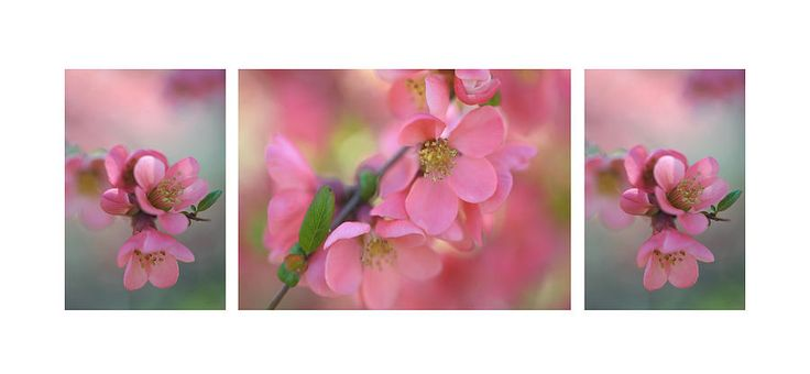 The Tender Spring Blooms. Triptych by Jenny Rainbow