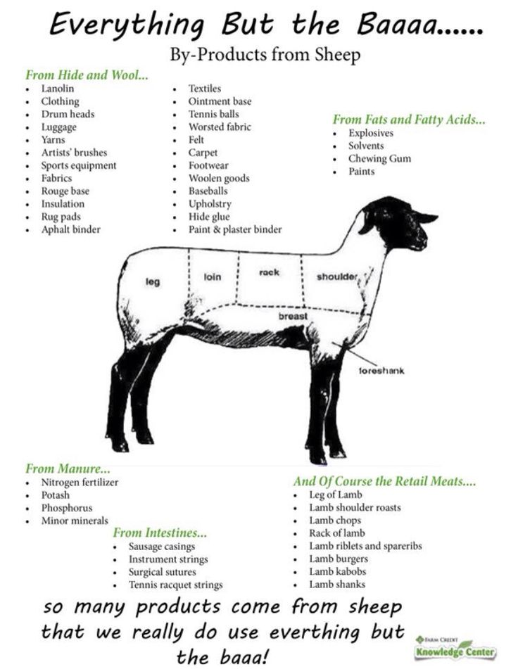 27 best images about beef by products on pinterest a cow animals and bone broth. Black Bedroom Furniture Sets. Home Design Ideas