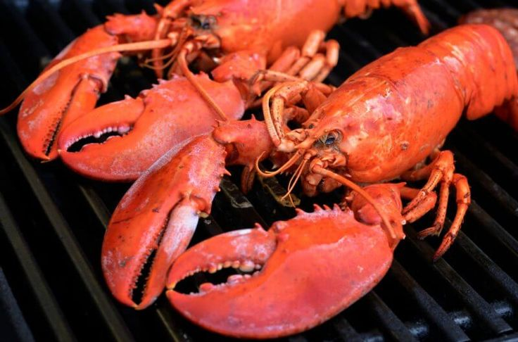 How to Cook Lobsters on the Grill without Ruining Them. Only grill lively, hard-shell lobsters about 1-1/2 pound or larger. [Lobster Recipes, Lobster, Fresh Seafood, Lobster Tail] https://lobsteranywhere.com Live Maine lobster delivery direct from LobsterAnywhere. New England's mail order premium seafood company online since 1999 with ocean fresh and frozen lobster on sale for your business or special event. Guaranteed overnight USA. Orders guaranteed. #Lobster #Recipe #Seafood