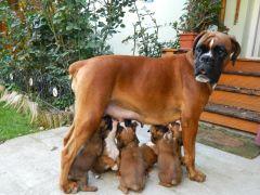 Kaya with puppies