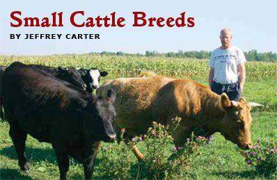 Small Farm? Try Small Cattle; Small Farm Canada Magazine