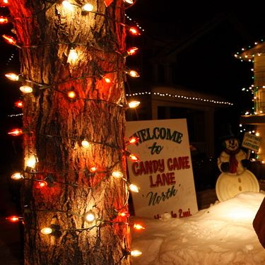 Candy Cane Lane Christmas Decorations 47 Best Candy Cane Lane Images On Pinterest  Candy Canes Stick