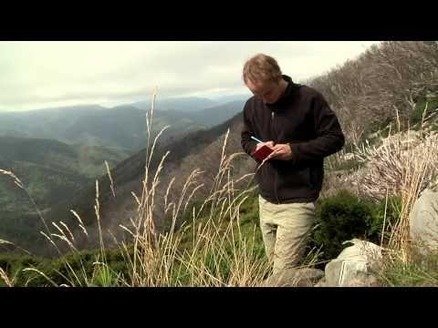 Possum Magic on the Mountain: Saving Mt Buller's Mountain Pygmy-possum - YouTube