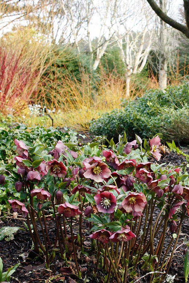 winter garden rosemoor google search