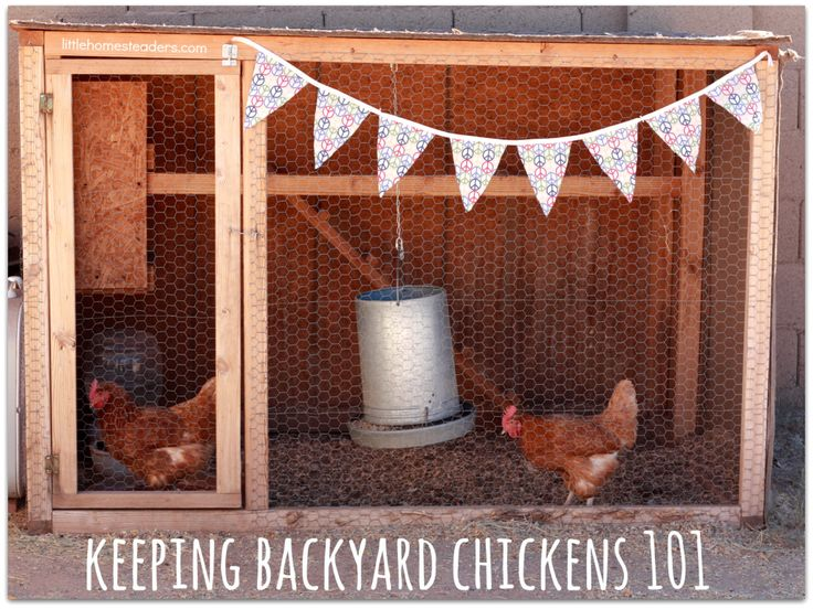 Bon Keeping Backyard Chickens 101   Girl Meets Nourishment |  Http://girlmeetsnourishment.com