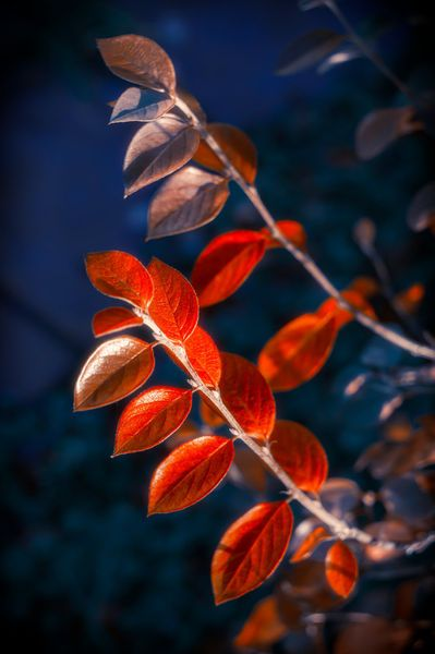Autumn Red Branch photo art print by cinema4design. #autumn #redleaves #indigo #photoprint #photogifts