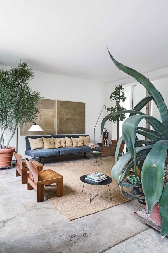 oversized succulent in living room with modern surf vibes. / sfgirlbybay
