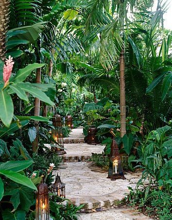 Tropical garden with walkway.