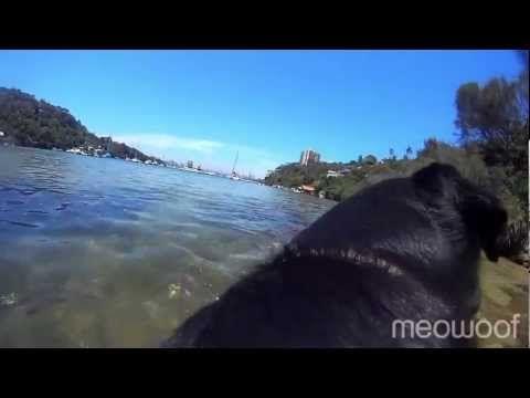 udie's fun day at Sirius Cove (dog beach)