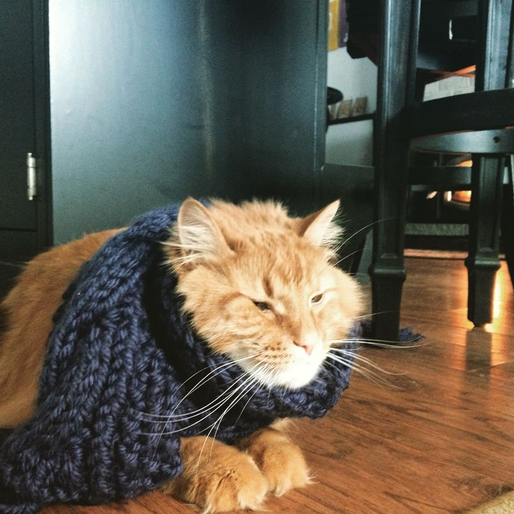 It's the six month anniversary of the day I put a scarf on my cat. Reddit meet Dexter.